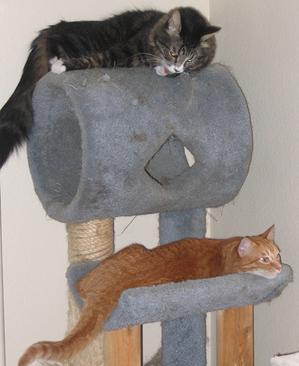 Stonedcats
